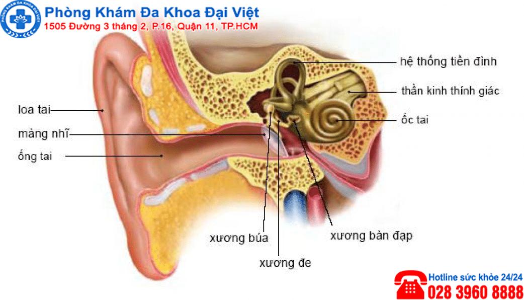 U dây thần kinh thính giác là gì ?